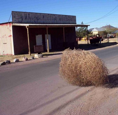 http://images.thetruthaboutcars.com/2008/06/tumbleweed.jpg